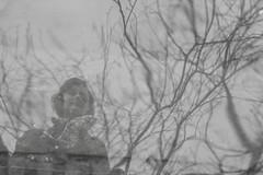 _MG_4678 (Arthur Pontes) Tags: winter cold fall water gua espelho olhar maria mergulho rvore reflexo frio casaco projeo duserldoff