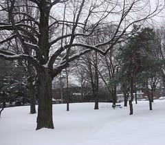 ** Le p'tit parc en hiver ** (Impatience_1) Tags: park winter snow tree bench hiver m neige arbre parc banc impatience coth supershot saveearth coth5