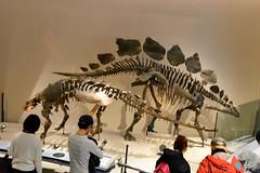 Stegosaurus () (Bri_J) Tags: japan museum tokyo dinosaur   stegosaurus  uenopark   nationalmuseumofnatureandscience