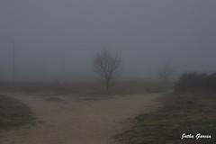 Mañanas de niebla (Jotha Garcia) Tags: winter cold mañana fog landscape arbol nikon december paisaje invierno niebla frio diciembre 2015 d3200 jothagarcia