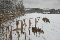 Endlich Schnee! 3 (mellane.karin) Tags: schnee winter snow ammertal