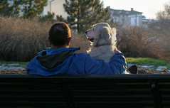 Sunset (Dragan*) Tags: park wood friends light sunset plants dog pet sunlight man reflection love animal goldenretriever bench sitting outdoor moment embrace danuberiver kalemegdan