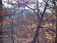 Layers and light (pilechko) Tags: trees winter light color leaves pa newhope bowmanshill