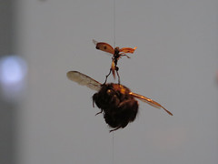 bee warrior (Jellibat) Tags: art gallery artgallery australia mona tasmania hobart berridale museumofoldandnewart