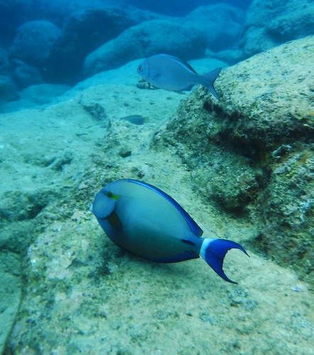 Sharks Cove 2015 25