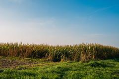 pop. (angsthase.) Tags: autumn sky green fall field grass germany landscape deutschland corn himmel nrw grn ruhrgebiet dortmund ruhrpott mft 2013 micro43 lumixg20f17 epl5 olympuspenepl5
