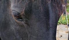 Horse-eye (John - K) Tags: horse blackhorse nexus