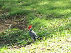 Birds at Diamond Head (skjoiner) Tags: birds hawaii oahu honolulu diamondheadcrater diamondheadstatemonument vacation2015 cruise2015