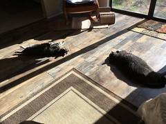Winter Morning Sun for the Cats 1 (sjrankin) Tags: california sunlight animal northerncalifornia cat warm floor edited tigger yuba 5february2016