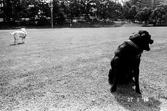 28 (Rob Walwyn) Tags: bw white black film 35mm fuji 28mm 400 neopan ricoh gr1