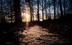 Snowy path 1 (densshod) Tags: sunset sky sun sunlight snow sweden outdoor path olympus sunburst