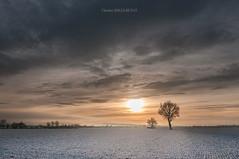 La plaine en hiver (Chris S-B) Tags: sunset snow tree hiver neige nuage tamron arbre coucherdesoleil