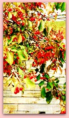 LOVE SEEING BERRIES ON A TREE (Visual Images1) Tags: tree berries 6ws frame dropshadow picmonkey