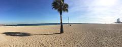 As far as the eye can see (KevinWatson.net) Tags: barcelona beach playa panoramic palmtree february whotel 2016