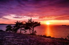 Last summer (Konalley) Tags: longexposure trees sunset sea summer seascape nature finland landscape island rocks warm long exposure mood colours purple silence hdr kes ndfilter gnd neutraldensityfilter nikond90 nikkor1024mmf3545ged