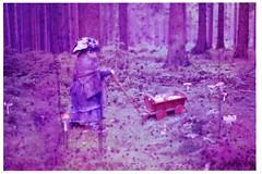 Waldfrau (Marlen Glüher) Tags: forest mushrooms pilze fliegenpilze wald baum trees surrealism dream nightmare experiment flecken staub nebel malerei gemalt fotomalerei lichtmalerei stains spots blurry foggy painted painting lightpainting anlaog 35mm film märchen geheimnisvoll mysterious fairy kobold granny