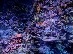 Great Barrier Reef - Asisi Panorama, Panometer Leipzig (André-DD) Tags: panorama coral germany painting deutschland underwater saxony leipzig sachsen greatbarrierreef corals riff unterwasser korallen gemälde koralle asisi panometer yadegarasisi