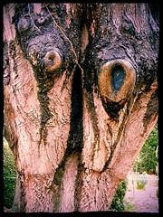 Petit monstre triste (isabelle bugeaud) Tags: yeux toulouse extrieur arbre bois trou tronc monstre jardindesplantestoulouse