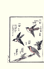 Coal tit, willow tit and varied tit (Japanese Flower and Bird Art) Tags: bird art japan japanese book tit picture willow coal woodblock varied kosa ukiyo ater urakawa poecile varius montanus paridae periparus sittiparus readercollection
