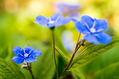 I love my Flek (Yanimal74) Tags: flowers flower flektogon carlzeiss explorewinnersoftheworld