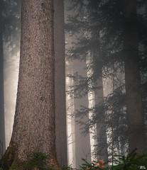 My forest at dawn (roland_lehnhardt) Tags: wood mist nature fog forest landscape dawn quiet nebel outdoor natur foggy silence landschaft bume einsamkeit stille nebelig ruhe wildnis naturemasterclass