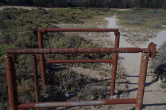 Nude zone, Pelican Point, Lake Bonney, near Barmera, SA, 15/02/16 (Russell Cumming) Tags: southaustralia nudebeach barmera renmark lakebonney pelicanpt
