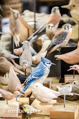 Hand-carved birds in an artist's studio in Pennsylvania. (Remsberg Photos) Tags: wood usa bird art studio artist pennsylvania wildlife craft bluejay carver realistic lifelike stahlstown