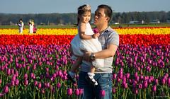 Skagit Valley Tulip Festival 2016 (SonjaPetersonPh♡tography) Tags: festival washington nikon unitedstates tulips tulip washingtonstate mountvernon skagitvalley skagitvalleytulipfestival laconner skagitcounty tulipfields stateofwashington skagitvalleytulipsfestival nikond5200 nikonafs18140mmf3556edvr skagitvalleytulipfestival2016