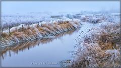 Blue Chill (Maclobster) Tags: blue maple frost ridge pitt polder chill