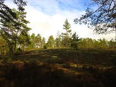 Teijo (calewas) Tags: suomi finland nationalpark salo teijo