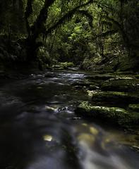 Waggon Creek (Pete Prue) Tags: park trees newzealand green water creek forest moss bush flora stream national tropical limestone lush ferns karst westcoast paparoa waggoncreek