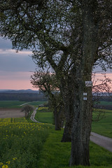 Richtung Flatten ... (thunderbird-72) Tags: orange france tree green grass yellow germany way deutschland abend spring frankreich gelb gras grn lorraine fr allemagne baum weg saarland spaziergang abendrot abendstimmung abendlicht lothringen launstroff steineandergrenze frhlung nikond7100 tamronaf70300mmf456divcusdif alsacechampagneardennelorraine alsacechampagneardennelorrain
