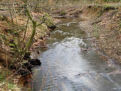 Duisburg - Wambach II (Jo Dudek) Tags: wasser outdoor laub natur pflanze duisburg wald blätter bäume wambach
