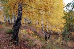 DSC_6063 (Rustam Bikbov) Tags: autumn september 2012    sverdlovskoblast