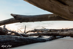 Big Talbot Island (Nine One Media) Tags: park beach sunrise canon island big long exposure state driftwood talbot ameliaisland 60d nineonemedia