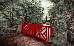 Standout (evangelique) Tags: autumn trees flower fall leaves bluemountains mountwilson