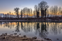 Week 11 - Reflection (Attilio Piselli) Tags: trees sunset reflection water river landscape mirror tramonto fiume dogwood tanaro