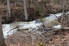 IMG_0306 ( Szczep Wodny Batyk ) Tags: zima wiosna brucetrail snieg wedrowka szczepwodnybaltyk szczepbaltyk silvercreekconservationarea wedrownicy druzyna16ta starsiharcerze