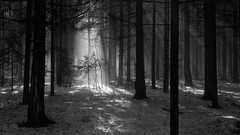 breaking the darkness (Sergey S Ponomarev - very busy) Tags: trees light bw mist snow primavera nature fog forest canon spring woods europe shadows darkness russia walk branches magic north natura bn neve april rays trunks aprile paysage stroll shining beams luce paesaggio nord biancoenero russie kirov 2016  russland         vyatka   70d    sergeyponomarev ef24105f40l viatka  atmnosphere    wjatka