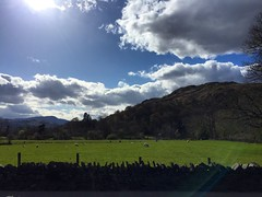 Lake District Sunshine (Marc Sayce) Tags: park blue sky lake skies sheep district national cumbria fields grazing ambleside