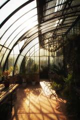 Bain de lumire (Sylvain Alexandre) Tags: light glow lumire magic greenhouse bain magical magie serre