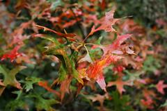 IMG_9374 (Volvtil) Tags: chile naturaleza nature cajondelmaipo