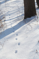 Recent Visitor (peterkelly) Tags: winter snow ontario canada tree digital forest canon hamilton tracks trunk northamerica dundas 6d bole pleasantview