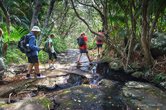 Crossing Erskine Creek, Lord Howe Is (NettyA) Tags: trees plants water creek rocks stream australia hike nsw day6 bushwalk unescoworldheritage lordhoweisland 2016 lhi bushwalker erskinecreek mtgower pandanusforsteri janetteasche lordhoweforclimate mtgowerclimb erskinevalley