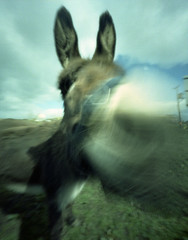A Walk on the Bright Side (wheehamx) Tags: motion colour movement donkey pinhole ayrshire