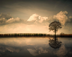 #reflections (Eric Goncalves) Tags: morning white color tree nature sepia clouds reflections nikon sigma gloucestershire severn imagination treescape waterscape