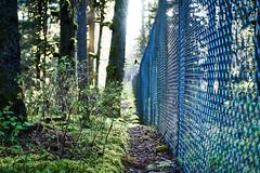 Along the Fence Line (naql) Tags: nature alaska fence path trail kodiak kodiakisland kodiakak captureone sprucecape sonye35mmf18 sonya6000 sonyilce6000