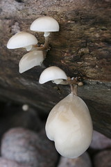 Pilz.1 (tara.celin) Tags: world sun water colors sunshine amazing wasser pflanze holz pilz nass