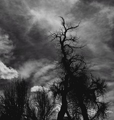 When the lights go down continued...! (KWinters Photography) Tags: sky blackandwhite bw white black tree nature monochrome clouds landscape lights bush nikon colorado flickr shadows outdoor branches gray brush nikkor nikondigital schwarz weis monochromie nkondsl
