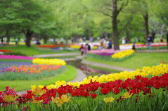 """Tulip Park • <a style=""""font-size:0.8em;"""" href=""""http://www.flickr.com/photos/64963600@N04/26646746865/"""" target=""""_blank"""">View on Flickr</a>"""